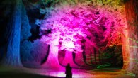 Benmore Botanic Garden - Glowing Giants