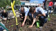An urban allotment springs to life in Bristol's Millennium Square