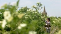 Elderflower Festival - Belvoir - Leicestershire