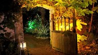 Enchanted Floodlit Garden - Abbotsbury Subtropical Garden