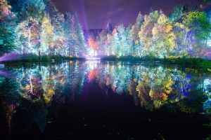 The Enchanted Forest (Photo: Angus Forbes)