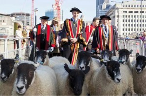 London Sheep Drive 2016