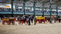 National Shire Horse Show (Photo: Tracy Muir)