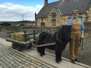 Beamish Museum - Horses at Work, Meet the pit pony