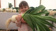 Giant leeks and heavy marrows at Beamish