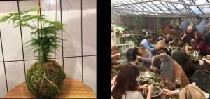 kokedama workshop - London Capital Garden Centre 2018
