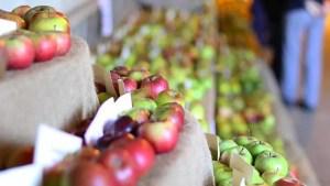 Brogdale apple display - National Apple Festival, Kent