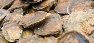 Fal Oysters Festival 2018 Cornwall