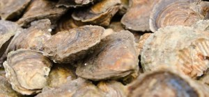 Fal Oysters Festival 2018 Cornwall