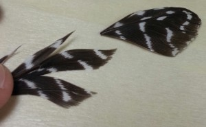 Pic 11 Feathers