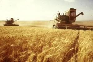 Récolte du blé