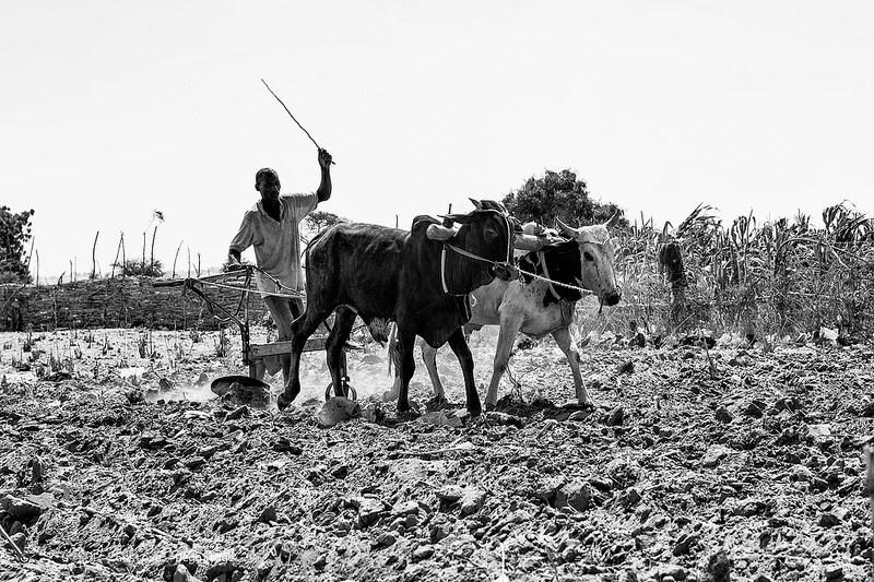 Agriculture Niger CC DeGust