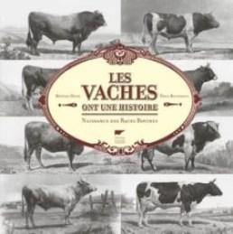 Amélioration des races bovines