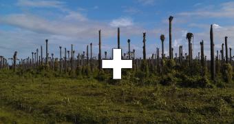 Palmöl Plantage Bäume Schweiz Freihandel