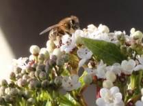 Barry Griffiths 22 jan pollen 2