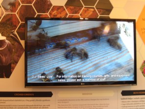 Live video from the Bees Wales apiary