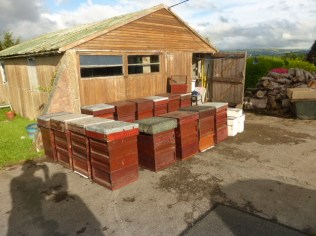 Good quality hives sold in 2016
