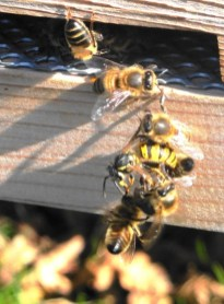 wasp fight