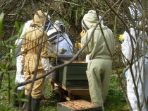 A beekeeping class, all well-protected.