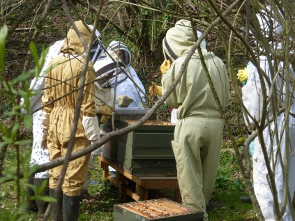 Getting close to the bees