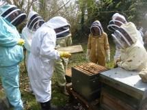 Meet the bees