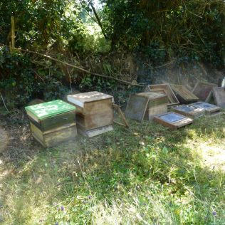 Empty beehives and mesh floors