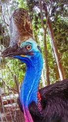cooberrie-park-wildlife-sanctuary-2