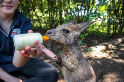 cooberrie-park-wildlife-sanctuary-33