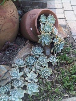 Awesome Succulent Garden Ideas In Your Backyard 31