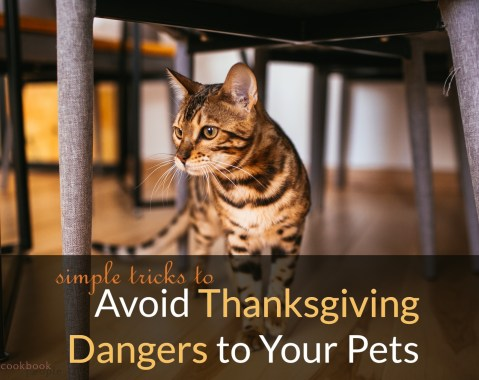 Cat under table with title: Avoid Thanksgiving Dangers to Your Pets