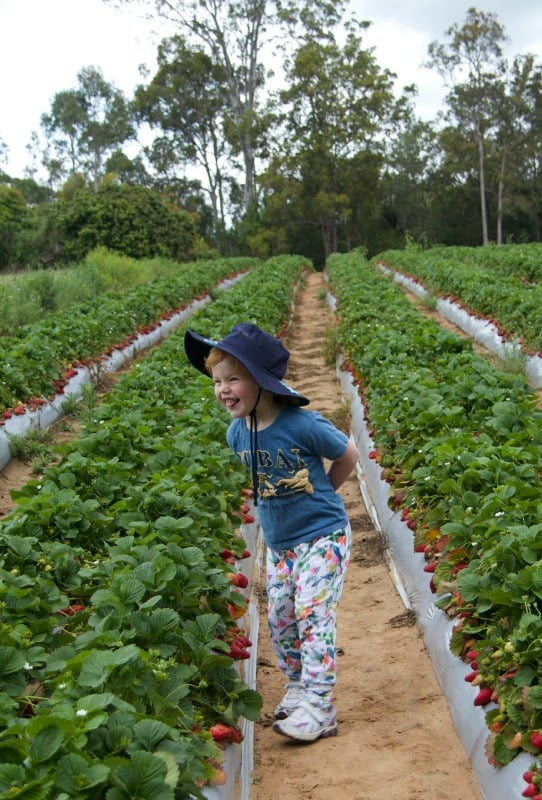 the little sister picking strawberries