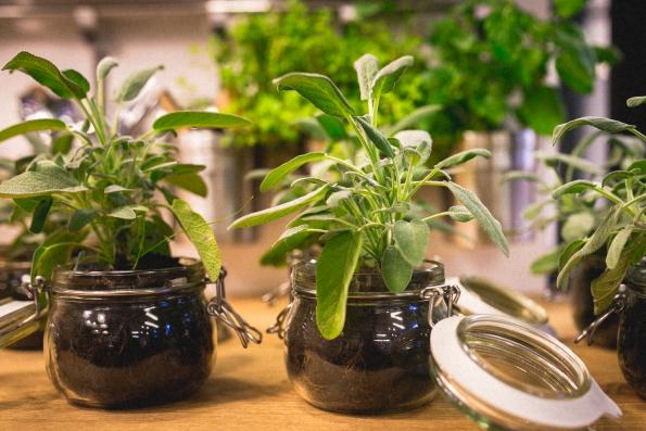kitchen-plants-2
