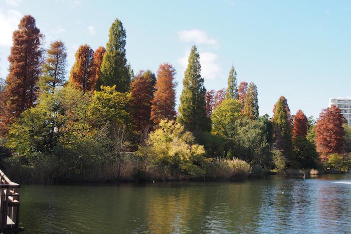 Autumn at Inokashira Park