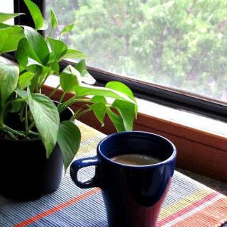 Cardamom Tea Recipe-Cardamom Tea with Milk {Recipe}