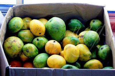 easy mango recipes to use up ripe mangoes