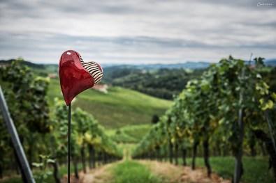Weingärten soweit das Auge reicht