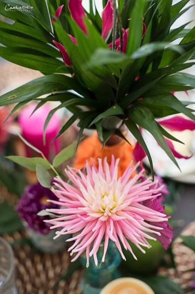 Aloha Pflanzen_0271