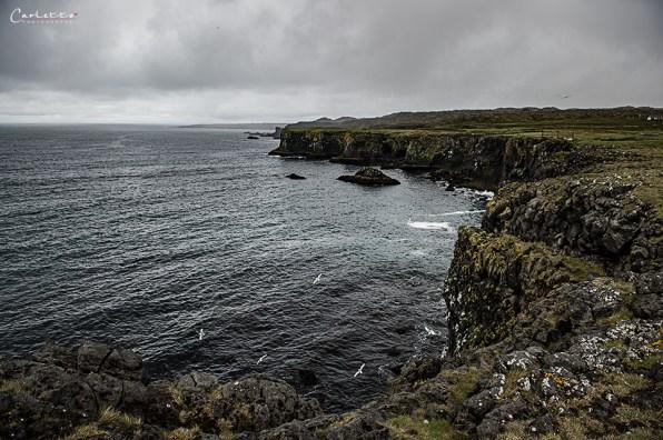 Island Snaefellsnes_6716