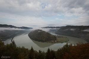 Donauschlinge
