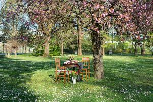 Picknick im Park - Holztisch mit zwei Stühlen, dekoriert mit Blumen, Kuchen