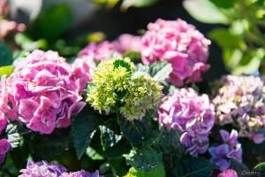 Blumen für Terassengarten