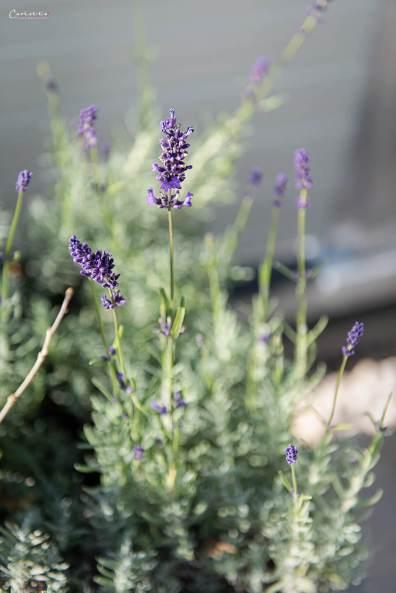 Blumen im Terassengarten