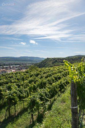 Niederösterreich Weingut Salomon_2653