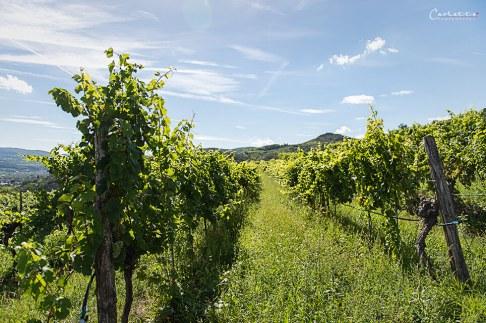 Niederösterreich Weingut Salomon_2659