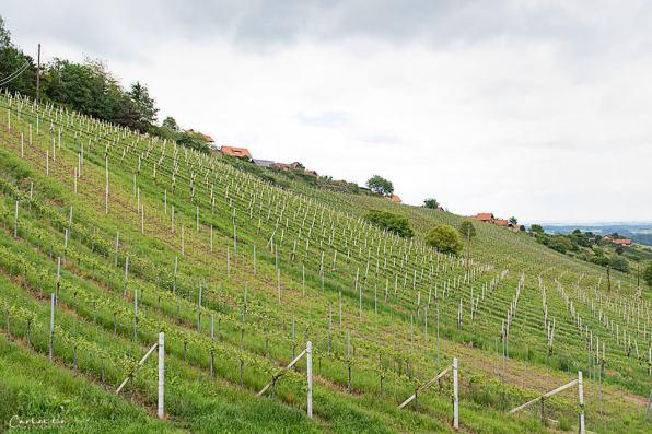 Steiermark Hiden_5282