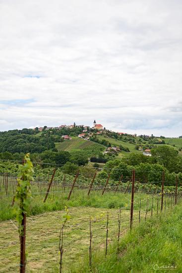 Steiermark Scharl_4196