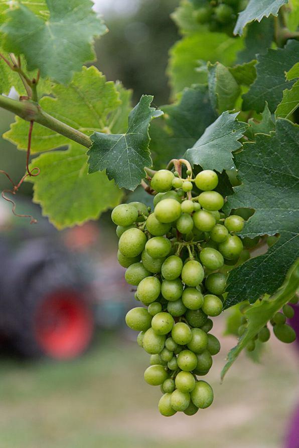 Österreich Wein Weingut Fritsch_1418