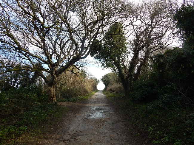 Old Harry Trail