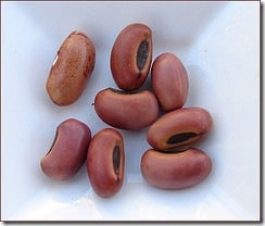 Cook Kidney Beans Safely