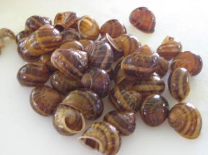 escargot3
